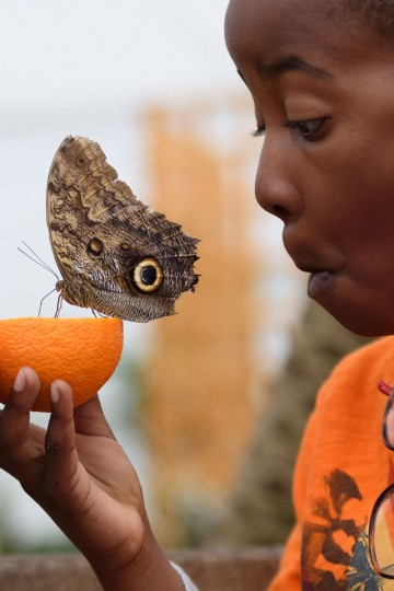 Bjorn, 6, poses for pictures with an Owl butterfly during a photocall at the Natural History Museum in central London on March 23, 2016. (LEON NEAL/AFP/Getty Images)