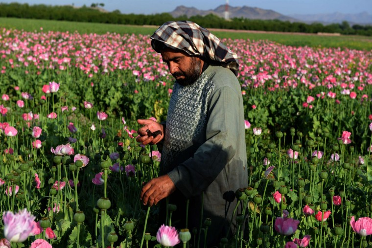 An Afghan farmer harvests opium sap from a poppy field in Zari District of Kandahar province on April 12, 2016. Opium poppy cultivation in Afghanistan dropped 19 percent in 2015 compared to the previous year, according to figures from the Afghan Ministry of Counter Narcotics and United Nations Office on Drugs and Crime. (Jawed Tanveer/AFP/Getty Images)
