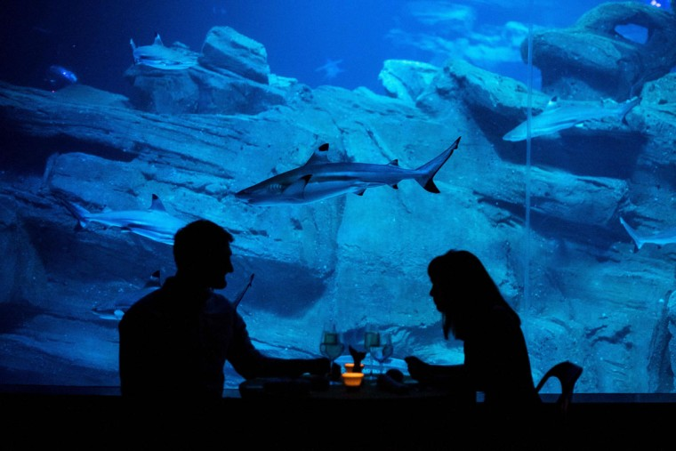 Alister Shipman and Hannah Simpson, winners of a competition on the Airbnb accommodation site, share a glass of champagne in front of a shark tank at the Aquarium de Paris on April 11, 2016 in Paris. The winners were offered a free one night stay in an underwater bedroom surrounded by a shark tank at the French capital city aquarium. (PHILIPPE LOPEZ/AFP/Getty Images)