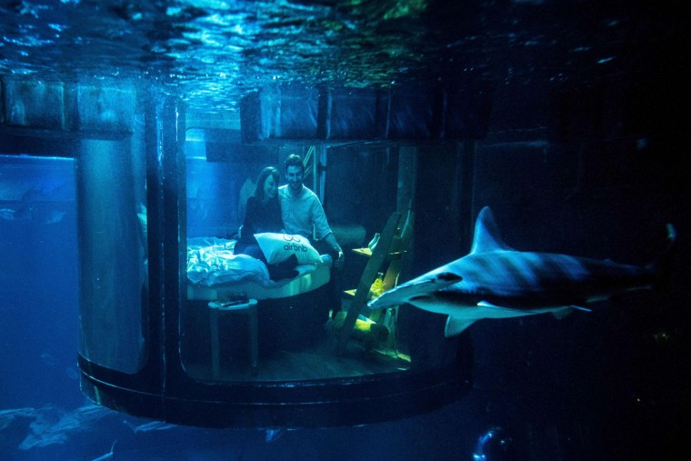 Alister Shipman and Hannah Simpson, winners of a competition on the Airbnb accommodation site, look at a shark tank from an underwater bedroom at the Aquarium de Paris on April 11, 2016 in Paris. The winners were offered a free one night stay in an underwater bedroom surrounded by a shark tank at the French capital city aquarium. (PHILIPPE LOPEZ/AFP/Getty Images)