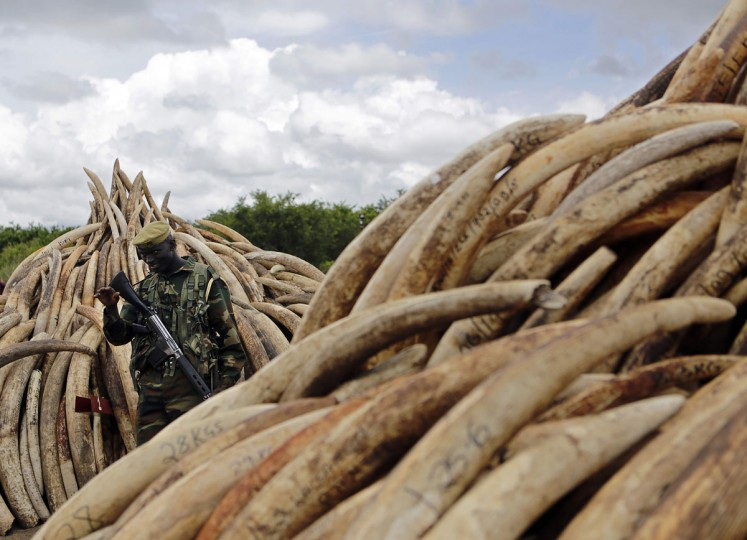 A Kenya Wildlife Services (KWS) ranger gestures to visitors to maintain a recommended distance from illegal stockpiles of elephant tusks stacked up onto pyres at Nairobi's national park, on April 28, 2016, waiting to be burned along with more than a tonne of rhino-horn at what is said to be the biggest stockpile destruction in history. Kenya on April 30, 2016 will burn approximately 105 tonnes of confiscated ivory, almost all of the country's total stockpile at an event to be attended by several African heads of state, conservation experts, high-profile philanthropists and celebrities at the event which they hope will send a strong anti-poaching message. (TONY KARUMBA/AFP/Getty Images)