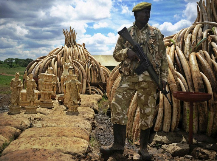 A Kenya Wildlife Services (KWS) ranger stands guard next to illegal stockpile of elephant tusks and ivory figurines before their destruction, in the national park of Nairobion April 27, 2016. Kenya on April 30, 2016 will burn approximately 105 tonnes of confiscated ivory, almost all of the country's total stockpile at an event attended by several African heads of state, conservation experts, high-profile philanthropists and celebrities which they hope will send a strong anti-poaching message. (TONY KARUMBA/AFP/Getty Images)