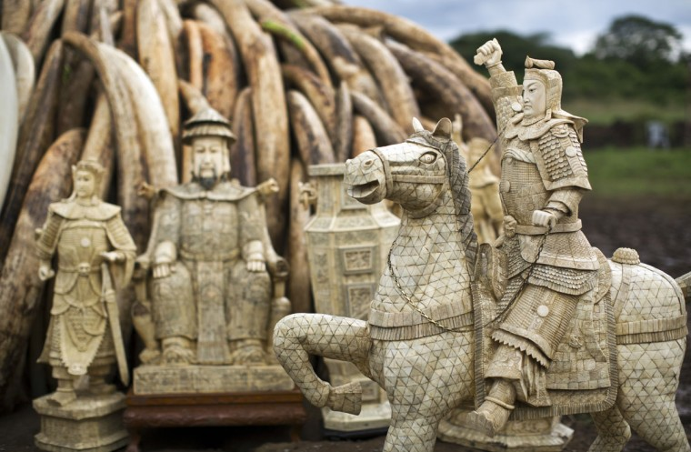 Ivory statues stand in front of one of around a dozen pyres of ivory, in Nairobi National Park, Kenya Thursday, April 28, 2016. The Kenya Wildlife Service (KWS) has stacked 105 tons of ivory consisting of 16,000 tusks, and 1 ton of rhino horn, from stockpiles around the country, in preparation for it to be torched on Saturday to encourage global efforts to help stop the poaching of elephants and rhinos. (AP Photo/Ben Curtis)
