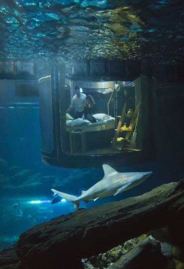 Contest winners Hanah Simpson, left, and Alastair Shipman look at a shark as they sit in a underwater bedroom, housed in a shark tank at the Aquarium de Paris, France, Monday, April 11, 2016. (AP Photo/Michel Euler)