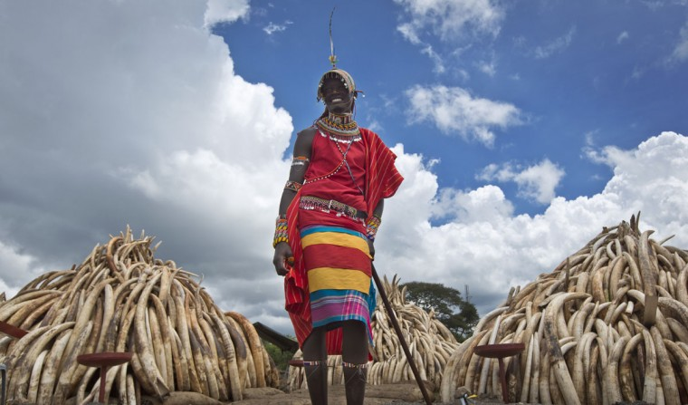 A Maasai man in ceremonial dress poses for visitors to take photographs of him in front of one of around a dozen pyres of ivory, in Nairobi National Park, Kenya Thursday, April 28, 2016. The Kenya Wildlife Service (KWS) has stacked 105 tons of ivory consisting of 16,000 tusks, and 1 ton of rhino horn, from stockpiles around the country, in preparation for it to be torched on Saturday to encourage global efforts to help stop the poaching of elephants and rhinos. (AP Photo/Ben Curtis)