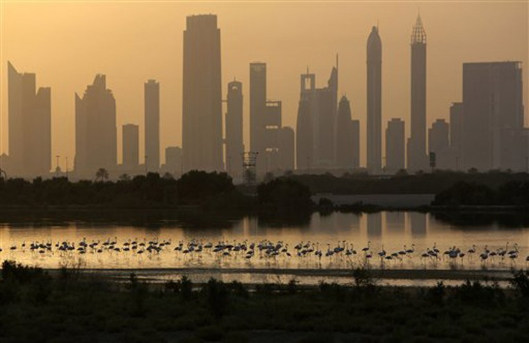 In this Wednesday, May 28, 2014 photo, with skyscrapers along the Sheikh Zayed highway, at background, pink flamingos look for food by the creek, at the Ras Al Khor Wildlife Sanctuary in Dubai, United Arab Emirates. Beneath a glitzy skyline wooden boats ply Dubai Creek, the historic heart of a city that was transformed in little more than a generation from a tiny pearling and fishing port to a global trading hub. (AP Photo/Kamran Jebreili)