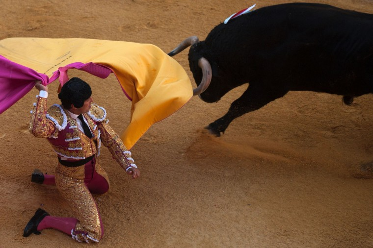 "Spanish matador Francisco Rivera Ordonez kneels to receive the bull with the ""capote"" during the Corpus bullfighting festival at the bullring of Granada on May 25, 2016. (JORGE GUERRERO/AFP/Getty Images)"