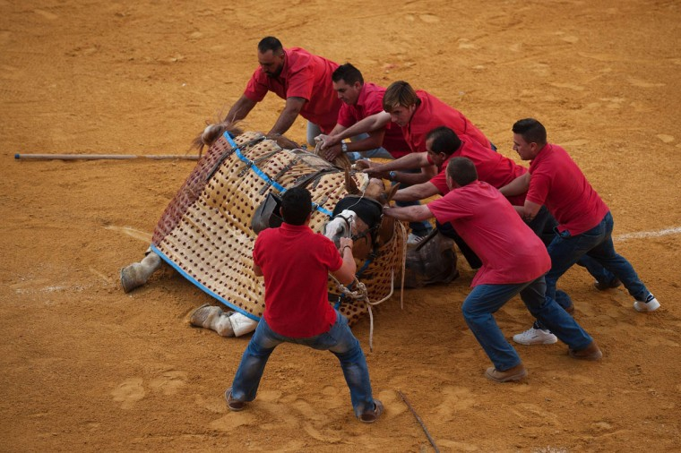 """Monosabios"" (picador's assistants) help picador's horse to get up after being knocked down by the bull during the Corpus bullfight festival at the bullring of Granada on May 25, 2016. (JORGE GUERRERO/AFP/Getty Images)"