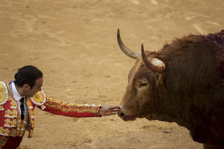 Spanish bullfighter Enrique Ponce touches a dying bull after he stabbed a sword on the back of the bull during a bullfight of the San Isidro's bullfighting fair in Madrid, Spain, Thursday, May 19, 2016. (AP Photo/Daniel Ochoa de Olza)