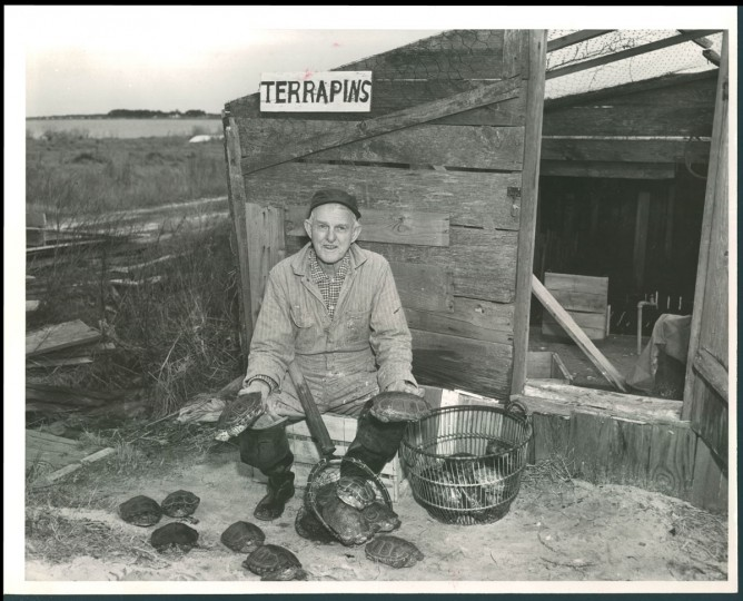 """Miles Hancock with his terrapins, 1962. He pronounced the word """"tappen"""" in his soft Virginia tidewater accent, according to The Sun. (Bodine/Baltimore Sun)"""