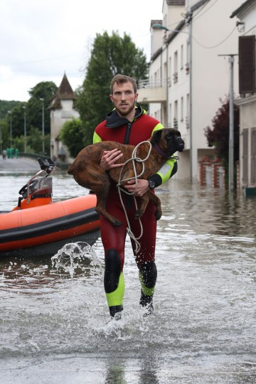 A rescuer evacuate a dog across a flooded street on June 1, 2016 in Souppes-sur-Loing, southeast of Paris. Torrential downpours have lashed parts of northern Europe in recent days, leaving four dead in Germany, breaching the banks of the Seine in Paris and flooding rural roads and villages. (AFP PHOTO / KENZO TRIBOUILLARD)