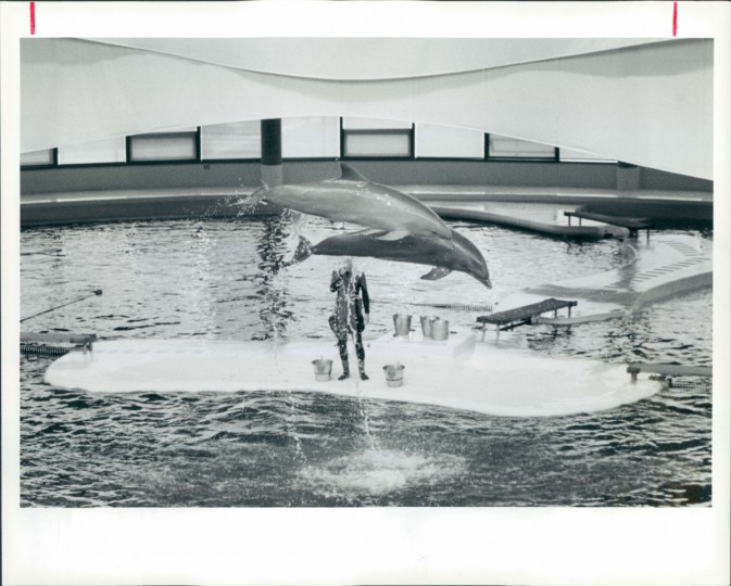 August 7, 1991: Dolphins perform at the Marine Mammal Pavilion on the Aquarium's 10th Anniversary. (Lam/Baltimore Sun)
