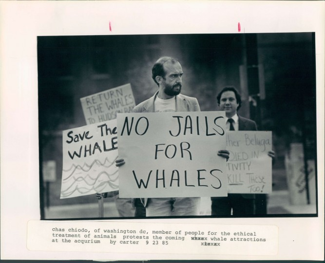 September 24, 1985: Charles Chiodo (Chlodo) of PETA protests the presence of marine mammals at the National Aquarium in Baltimore. (Carter/Baltimore Sun)