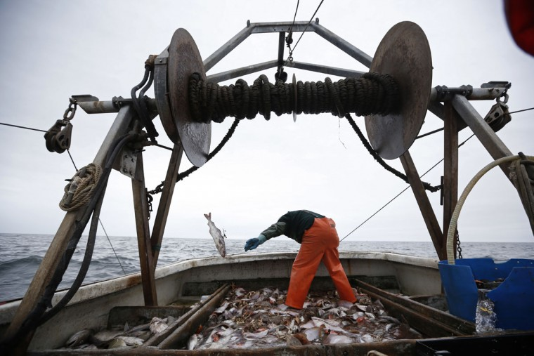 David Goethel sorts cod and haddock while fishing aboard his trawler off the coast of New Hampshire. To Goethe, cod represents his identity, his ticket to middle class life, and his link to one the country's most historic industries, a fisherman who has caught New England's most recognized fish for more than 30 years. (AP Photo/Robert F. Bukaty)
