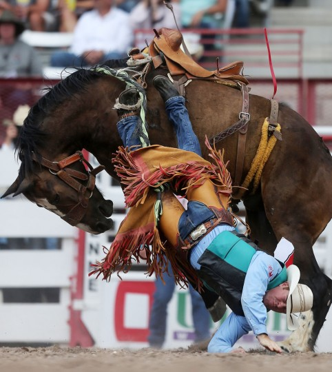 Cody Peterson, of Yoder, Colo., hits the ground in the rookie bronc competition during the first day of the Cheyenne Frontier Days Rodeo, Saturday, July 23, 2016, at Frontier Park Arena in Cheyenne, Wyo. (Blaine McCartney/Wyoming Tribune Eagle via AP)