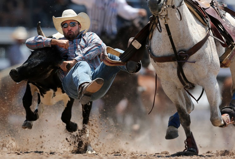 Troy Brandemuehl competes in the steer wrestling event during the fifth day of the 120th annual Cheyenne Frontier Days Rodeo on Wednesday, July 27, 2016, at Frontier Park Arena in Cheyenne, Wyo. (Blaine McCartney/The Wyoming Tribune Eagle via AP)