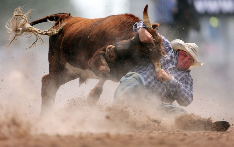 Ty Lang, of Montrose, Colo., brings down his steer in the steer wrestling event during the first day of the Cheyenne Frontier Days Rodeo, Saturday, July 23, 2016, at Frontier Park Arena in Cheyenne, Wyo. (Blaine McCartney/Wyoming Tribune Eagle via AP)