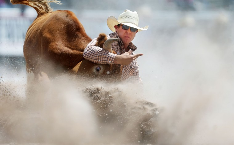 Cameron Morman, of Glenullin, N.D., brings down his steer in a cloud of dust in the second section of steer wrestling Saturday, July 23, 2016, during the first day of the Cheyenne Frontier Days Rodeo at Frontier Park Arena in Cheyenne, Wyo. Morman recorded a time of 19.4 seconds on the run. (Blaine McCartney/Wyoming Tribune Eagle via AP)