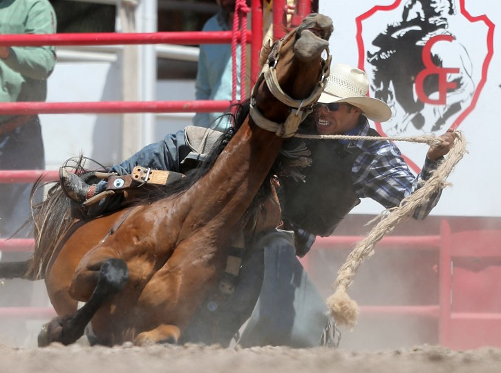 Leon Fountain of Socorro, N.M. tries to stay on his horse in the rookie saddle bronc event during the fifth day of the 120th annual Cheyenne Frontier Days Rodeo Wednesday afternoon, July 27, 2016, at Frontier Park Arena in Cheyenne, Wyo. (Blaine McCartney/Wyoming Tribune Eagle via AP)