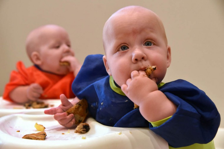 Oliver, known as Ollie, and Finn behind him, eat pieces of homemade pancakes. Kristen makes double batches of food, and freezes some for future meals. Ollie weighs 20.15 pounds. (Amy Davis/Baltimore Sun)
