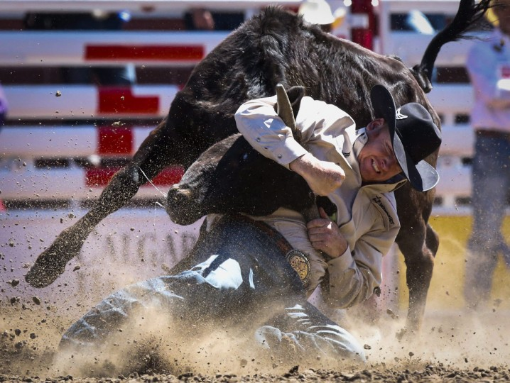 Curtis Cassidy wrestles a steer during the Calgary Stampede in Calgary, Alberta, Sunday, July 10, 2016. (Jeff McIntosh/The Canadian Press via AP)
