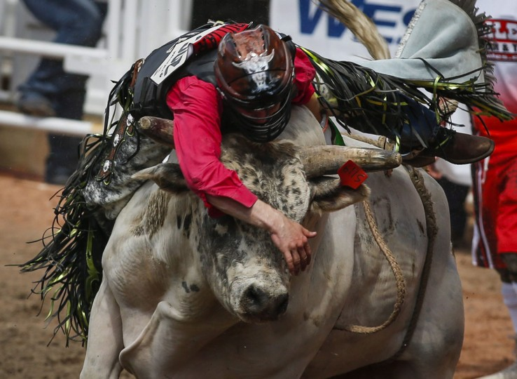 Dakota Buttar, of Kindersley, Saskatchewan, stays on Houndini Magic long enough to win during a bull-riding event at the Calgary Stampede in Calgary, Alberta, Friday, July 8, 2016. (Jeff McIntosh/The Canadian Press via AP)