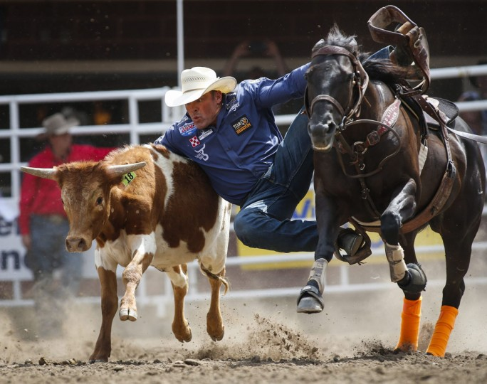 K.C. Jones, of Decatour, Texas, wrestles a steer during the Calgary Stampede in Calgary, Alberta, Friday, July 8, 2016. (Jeff McIntosh/The Canadian Press via AP)