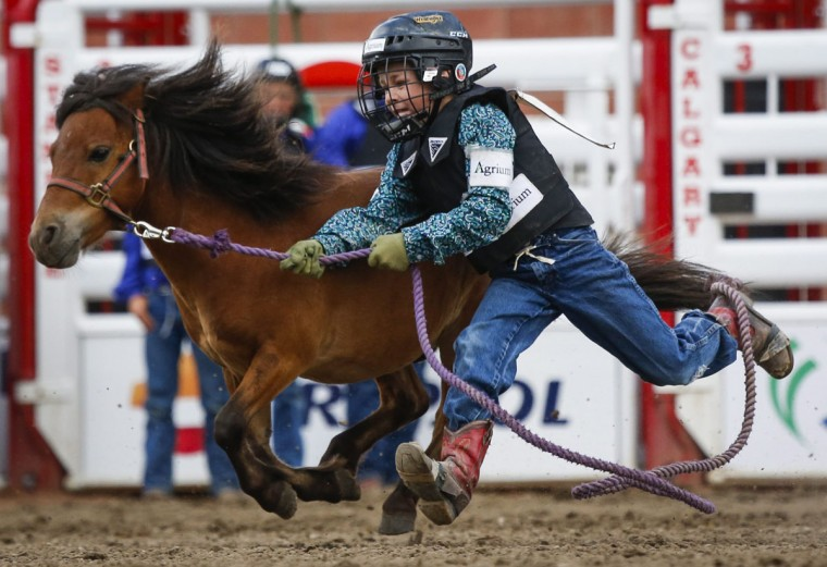 A competitor in the wild pony race tries to catch a pony during the Calgary Stampede in Calgary, Alberta, Sunday, July 10, 2016. (Jeff McIntosh/The Canadian Press via AP)