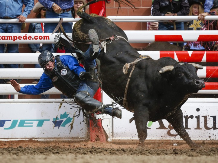 Jared Parsonage comes off Lowlife during bull riding rodeo action at the Calgary Stampede in Calgary, Alberta, Sunday, July 10, 2016. (Jeff McIntosh/The Canadian Press via AP)
