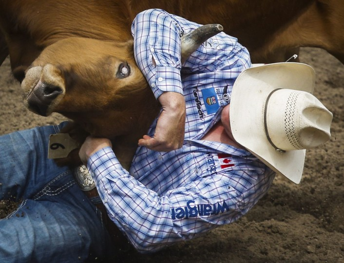 Curtis Cassidy wrestles a steer at the Calgary Stampede in Calgary, Alberta, Saturday, July 9, 2016. (Jeff McIntosh/The Canadian Press via AP)