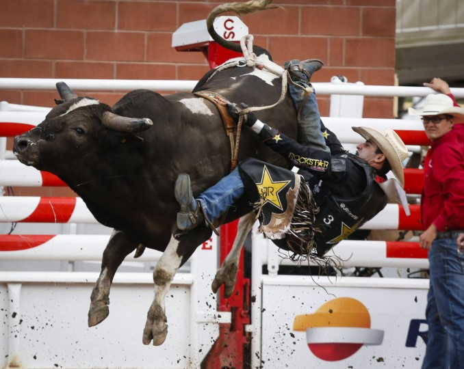 Joao Ricardo Vieira, of Sao Paulo, Brazil, comes off Tricky Deal during bull riding rodeo action at the Calgary Stampede in Calgary, Alberta, Sunday, July 10, 2016. (Jeff McIntosh/The Canadian Press via AP)