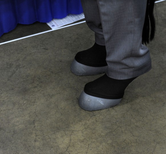 GreyPon3, the fursona being a tribute to Octavia, Grey and Vinyl, P3, shows some hooves in the Blank Canvas's Marketplace. BronyCon is the world's largest My Little Pony: Friendship is Magic convention. Held at the Baltimore Convention Center, BronyCon features panels, meet-ups, activities, and cosplay. BronyCon is the world's largest My Little Pony: Friendship is Magic convention. Held at the Baltimore Convention Center, BronyCon features panels, meet-ups, activities, and cosplay. (Caitlin Faw/Baltimore Sun staff)
