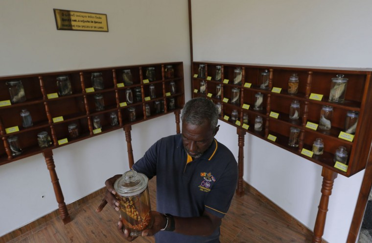 In this July 15, 2016 photo, a Sri Lankan mangrove conservation worker Douglas Tisserra inspects a bottle carrying a exhibited species in a mangrove museum in Pambala, about 70 kilometers (44 miles) north of Colombo, Sri Lanka. Sri Lanka's government and environmentalists are working to protect tens of thousands of acres of mangrove forests _ the seawater-tolerant trees that help protect and build landmasses, better absorb carbon from the environment mitigating effects of global warming and reducing impact of natural disasters like tsunamis.Authorities have identified about 37,000 acres (15,000 hectares) of mangrove forests in Sri Lanka that are earmarked for preservation. (AP Photo/Eranga Jayawardena)