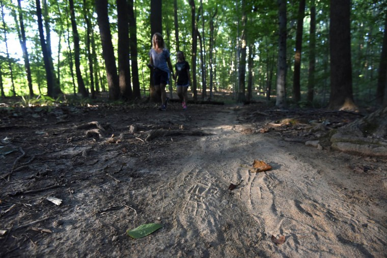Morning sunlight illuminates footprints in sandy soil on Wildlands Trail in the central area of the Gunpowder Falls State Park. The route, in the Sweathouse Area, winds through hardwood forest. (Kim Hairston, Baltimore Sun)