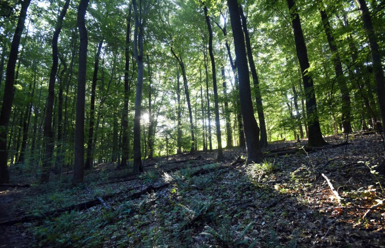 A sun rise intensifies the color of trees along the Wildlands Trail in the central area of the Gunpowder Falls State Park. The route, in the Sweathouse Area, winds through hardwood forest. (Kim Hairston, Baltimore Sun)