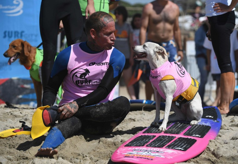 Surf dog Sugar, a Collie mix, and owner Ryan Ruston look at each other during the 8th annual Surf City Surf Dog event at Huntington Beach, California on September 25, 2016. Dogs, big and small, and some in tandem braved the large swell that greeted them at the iconic event. (AFP PHOTO / Mark RALSTON)