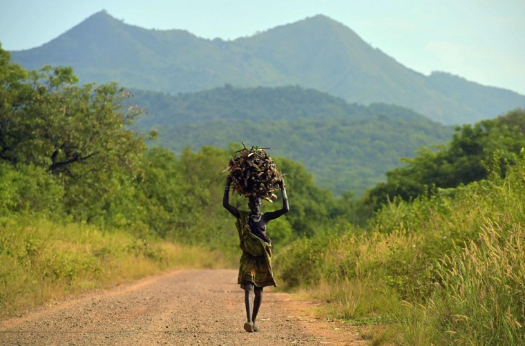 "A woman from the Suri tribe carries firewood on her head in Ethiopia's southern Omo Valley region, near Kibbish, on September 25, 2016. The Suri are a pastoralist Nilotic ethnic group in Ethiopia. The construction of the Gibe III dam, the third largest hydroelectric plant in Africa, and large areas of very ""thirsty"" cotton and sugar plantations and factories along the Omo river are impacting heavily on the lives of tribes living in the Omo Valley who depend on the river for their survival and way of life. Human rights groups fear for the future of the tribes if they are forced to scatter, give up traditional ways through loss of land or ability to keep cattle as globalisation and development increases. (AFP PHOTO / CARL DE SOUZA)"