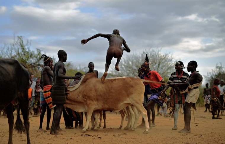 "A man from the Hamar tribe takes part in a bull jumping ceremony in Ethiopia's southern Omo Valley region near Turmi on September 19, 2016. The Hamar are a Nilotic ethnic group in Ethiopia. Bull jumping has been practised by the Hamars for thousands of years. The ceremony is a coming of age tradition which allows young men to marry. The man has to run across the backs of bulls which have been lined up, 4 times. If he falls through the row of bulls he is to start again until he finishes without falling. If the man fails to properly ""jump the bulls"" he risks humiliation and being cast out by his village as well as never being able to marry in the future. Before the ceremony women line up to be whipped by men holding sticks to prove their devotion to the men. The construction of the Gibe III dam, the third largest hydroelectric plant in Africa, and large areas of very ""thirsty"" cotton and sugar plantations and factories along the Omo river are impacting heavily on the lives of tribes living in the Omo Valley who depend on the river for their survival and way of life. Human rights groups fear for the future of the tribes if they are forced to scatter, give up traditional ways through loss of land or ability to keep cattle as globalisation and development increases. (AFP PHOTO / CARL DE SOUZA)"