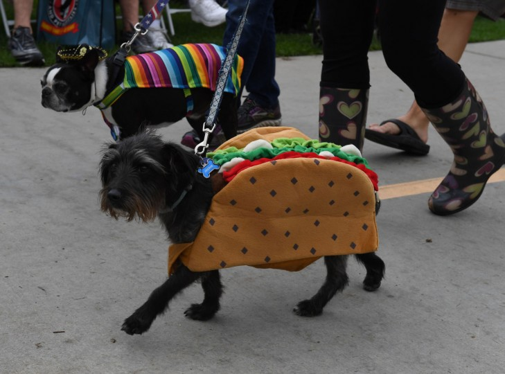 Dogs dressed in Halloween costumes are displayed during the annual Haute Dog Howl'oween parade in Long Beach, California on October 30, 2016. The parade, which claims to be the largest Halloween dog event in the world, sees hundreds of dogs and their owners dressed in colorful costumes celebrating the festival. (Mark Ralston/AFP/Getty Images)