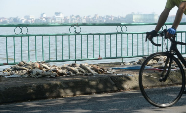 A cyclist rides pass dead fish after they were fished up from Ho Tay lake (West Lake), Hanoi's largest lake, on October 3, 2016. (HOANG DINH NAM/AFP/Getty Images)