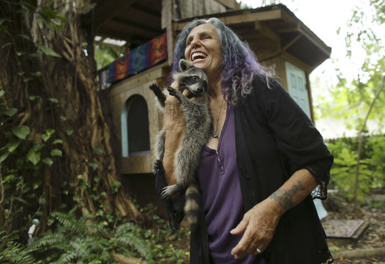 In this Monday, Sept. 19, 2016 photo, Shawnee Chasser holds her pet raccoon, Mary J. Blige, outside of her treehouse in Miami. Miami-Dade County code inspectors discovered the treehouse, declared it unfit for human habitation and ordered it torn down. Now she is fighting to keep her arboreal house, which on its ground floor features a sink with running water, a stove and a refrigerator, a computer and a television. It's also home to her dogs, cats and raccoon. (AP Photo/Lynne Sladky)