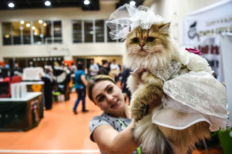 A woman poses with her cat before present it to the jury during a world cats show contest organized by the World Cat Federation (WCF) on October 16, 2016 in Istanbul. (OZAN KOSE/AFP/Getty Images)