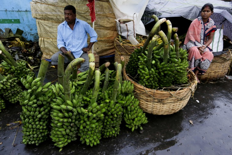 Indian vendors sell green bananas, one of the most important elements used in rituals during Chhat Puja festival in Kolkata, India, Saturday, Nov. 5, 2016. Chhath, an ancient Hindu festival popular amongst the working class, rituals are performed to thank the Sun God for sustaining life on earth. (AP Photo/Bikas Das)