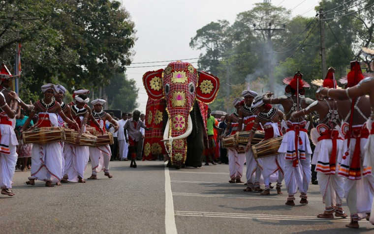 "In this Oct. 20, 2016 photo, Sri Lankan traditional dancers escort a tusker known as ""Nadungamuwe Tusker,"" who is famous for carrying the sacred tooth relic of the temple of tooth during its annual procession, during a felicitation to the animal for his services to Buddhist temple processions in Kirindiwela village, outside Colombo, Sri Lanka. For Buddhists, who make up 70 percent of the island's 20 million population, elephants are believed to have been a servant of the Buddha and even a previous incarnation of the holy man himself. Sinhalese kings rode elephants into battle against invading armies. And every year, colorfully decorated tuskers carry an ornate box containing a replica of one of the Buddha's teeth. (AP Photo/Eranga Jayawardena)"