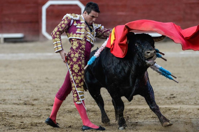 "Peru's bullfighter Jose Maria Manzanares, performs during the ""Senor de los Milagros"" festival at the Acho bullring in Lima on December 4, 2016. (AFP/Getty Images)"