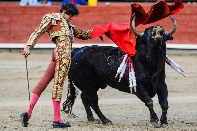"Peru's bullfighter Andres Roca Rey performs during the ""Senor de los Milagros"" festival at the Acho bullring in Lima on December 4, 2016. (ERNESTO BENAVIDES/AFP/Getty Images)"