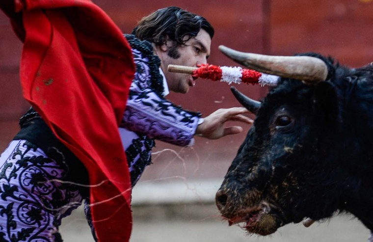 "Peru's bullfighter Morante de la Puebla, performs during the ""Senor de los Milagros"" festival at the Acho bullring in Lima on December 4, 2016. (ERNESTO BENAVIDES/AFP/Getty Images)"