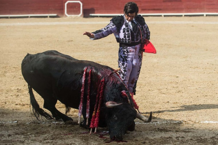 "Peru's bullfighter Morante de la Puebla, performs during the ""Senor de los Milagros"" festival at the Acho bullring in Lima on December 4, 2016. (AFP/Getty Images)"