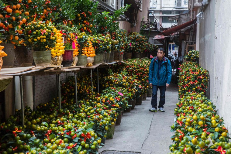 This picture taken on January 17, 2017 shows a man (R) walking past potted kumquat plants, a symbol of good luck and prosperity, on sale in Hong Kong for the Year of the Rooster as the 2017 Lunar New Year approaches. US President Donald Trump will strut through the Year of the Rooster, thriving as Hong Kong geomancers predict 2017 will be marked by the arguments and aggression -- characteristics attributed to the animal. (Isaac Lawrence/AFP/Getty Images)