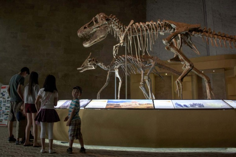 This picture taken on July 2, 2016 shows people visiting a museum displaying dinosaur fossils returned from overseas in Ulan Bator. For years, herder Gelegrash had a sideline bringing tourists to see a dinosaur skull hidden near the Flaming Cliffs in Mongolia's Gobi desert. Then, one day, it was gone. It is one of thousands of ancient fossils that have disappeared from the country since American explorer Roy Chapman Andrews -- supposedly the inspiration for the movie character Indiana Jones -- discovered dinosaur eggs there nearly a century ago. (JOHANNES EISELE/AFP/Getty Images)